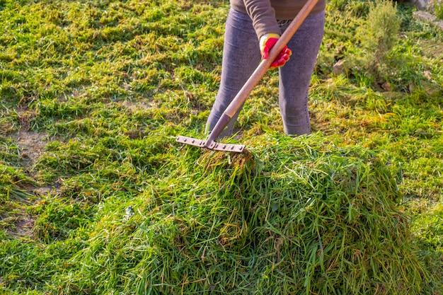 Уборка скошенной зеленой травы с газона. женщина сгребает траву в кучу металлическими граблями.
