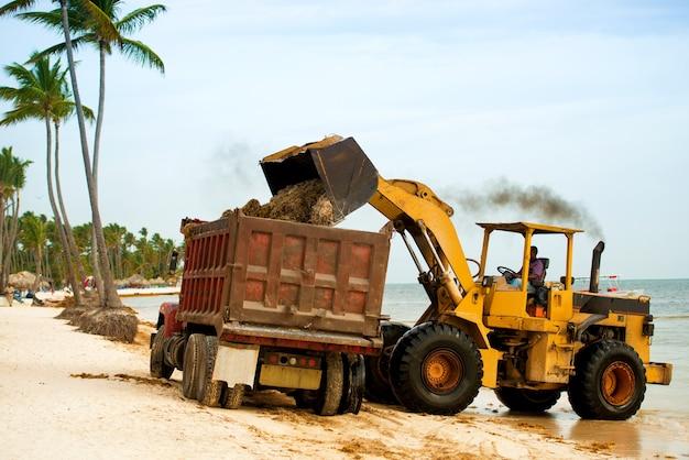 トラクターとダンパーで藻類からビーチを掃除します。