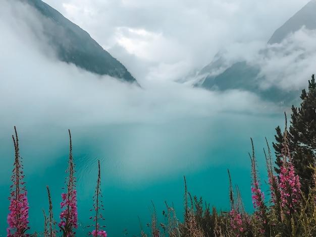 흐린 날씨에 생생한 보라색 꽃과 산이있는 맑고 푸른 고산 호수 schlegais.