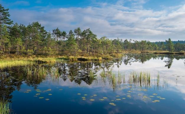 ロシアのレニングラード地方のオゼルノエ湿地自然保護区での澄んだ、きれいな夏の朝