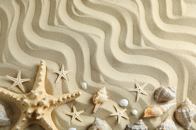 Clear sea sand with starfish and seashells, space for text and top view. summer vacation background