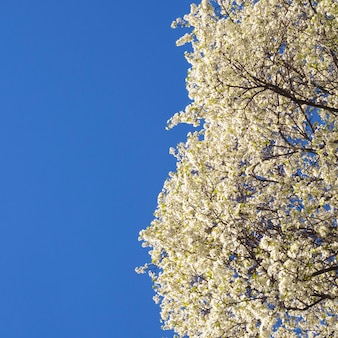 澄んだ春の空と広がる花の木