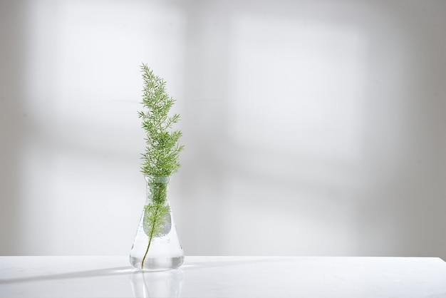 バイオテクノロジー科学研究室の背景に自然な緑の葉を持つガラスフラスコとバイアルの澄んだ水