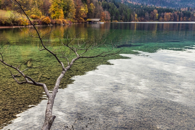 Clear waters of bavarian alpsee lake and autumn colors of the forest