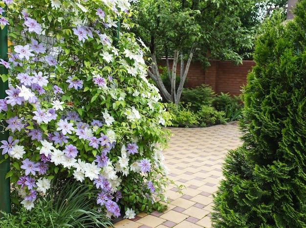 クレマチスの花が家の庭の柵を完全に覆っています。