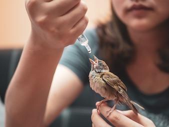 賢くてかわいい雀鳥