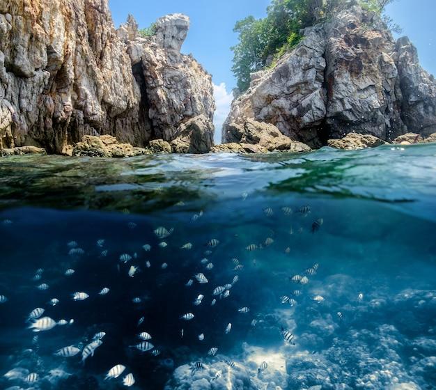 インディゴ海の魚群と崖の岩海峡