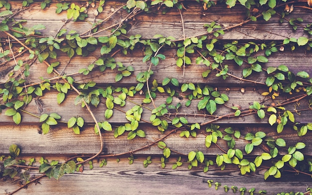 Climber plants with horizon wooden plank
