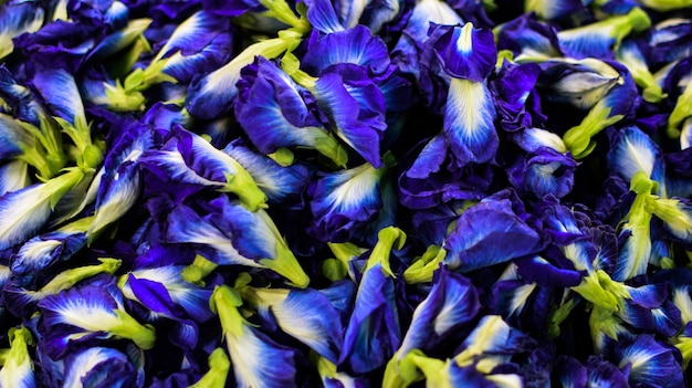 Clitoria ternatea, purple or pea flowers