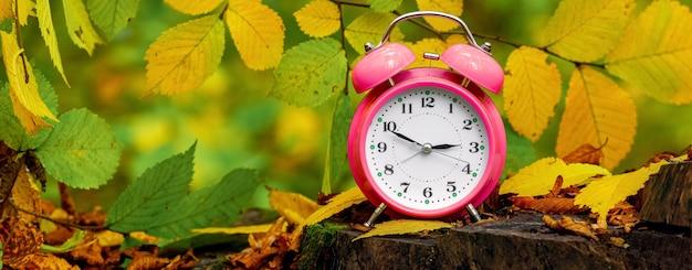 紅葉に囲まれた切り株の秋の森の時計、目覚まし時計。パノラマ