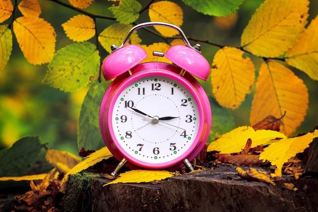 Часы, будильник в осеннем лесу на пне среди разноцветных листьев