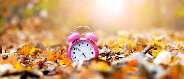 Часы в осеннем лесу среди опавших листьев в солнечный день, осеннее время
