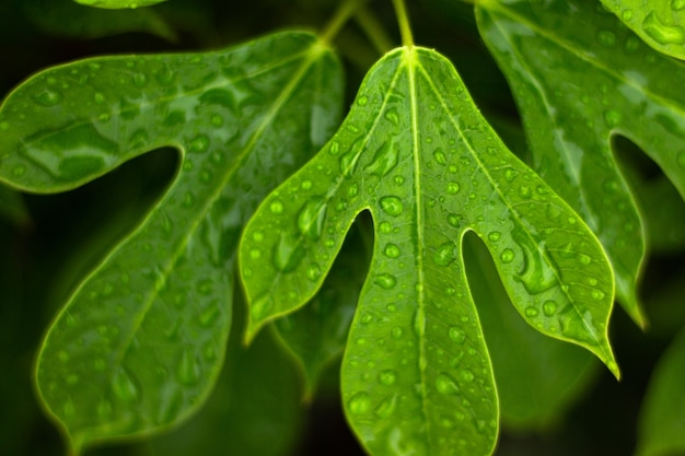 Clos-up and selected focus green leaf with water drops for background