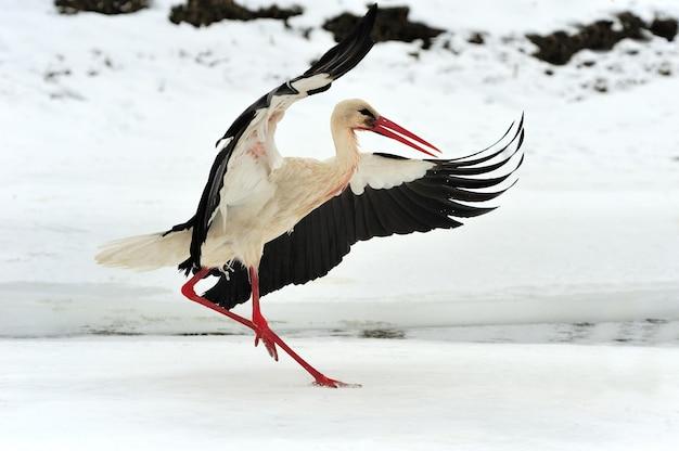 겨울에 아름다운 황새를 닫습니다.