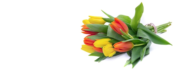 Close on bouquet of yelow and orange tulips isolated on white in panoramic view
