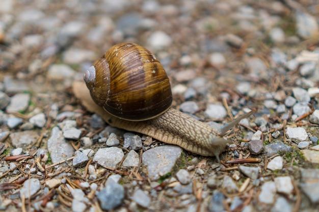 야생 동물의 작은 바위 위를 걷는 달팽이의 자막