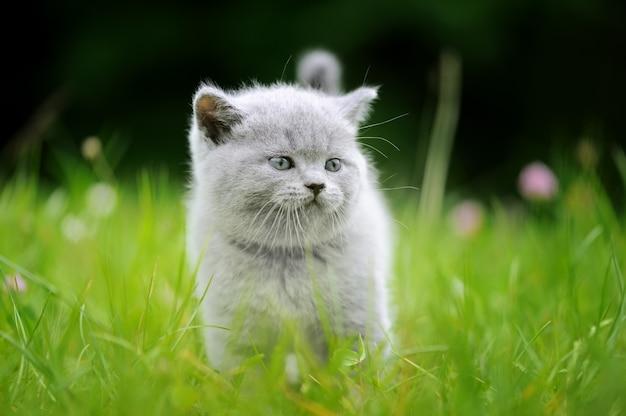 緑の草でかわいい灰色の子猫を閉じる