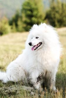 Закрыть милая белая собака в лесу