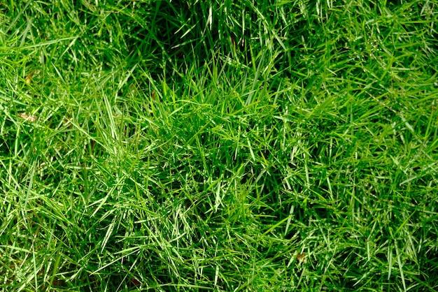 푸른 잔디의 세부 사항을 닫습니다