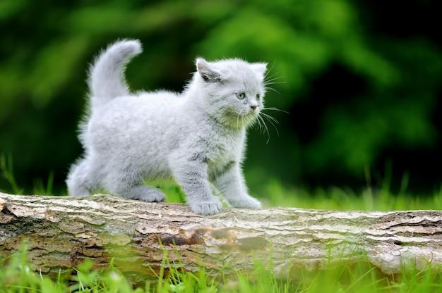 Close gray kitten on nature. cute baby kitten on tree