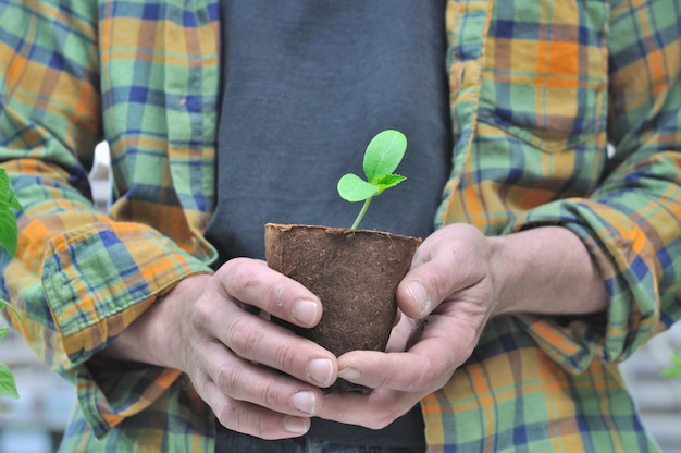 Close on  the hand of a gardener holding a seedlings growing  in a peat pot