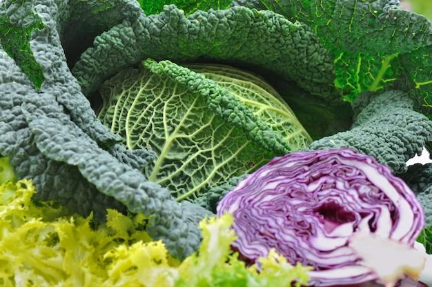 Close on leaf of  fresh cabbage