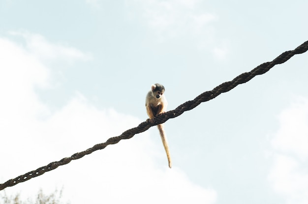 Close range shot of a monkey sitting on a rope
