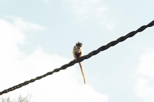Выстрел с близкого расстояния обезьяны, сидящей на веревке