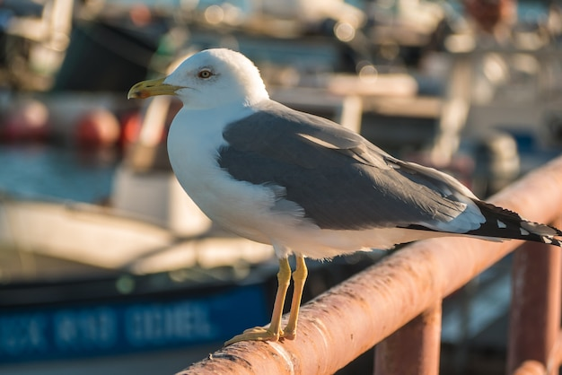 Close of seagull standing in the pier.