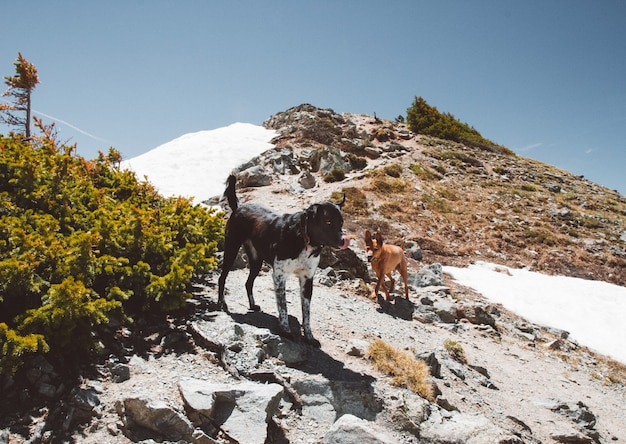 Close shot of dogs on a hill standing near the snow under a clear sky at daytime