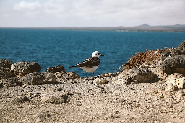 Close shot of a gull with a black beak standing on a cliff with a blurred sea