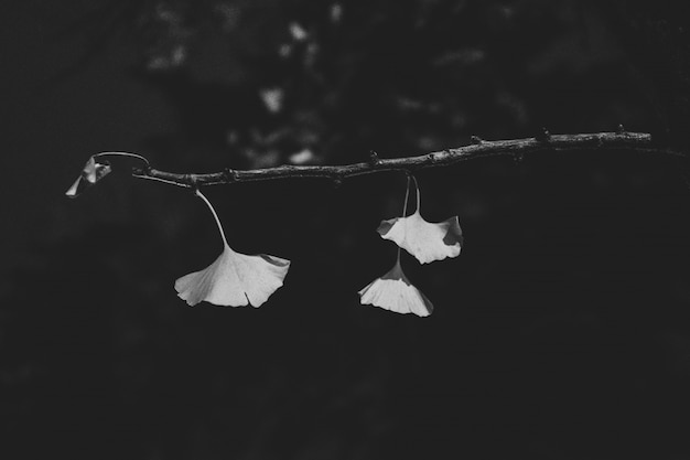 Close shot of leaves on the branch with a blurred background in black and white