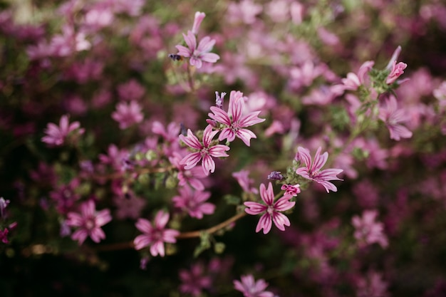 Close shot of light pink flowers with a blurred natural