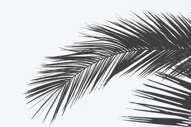 흰색 표면으로 야자수 잎의 가까운 총