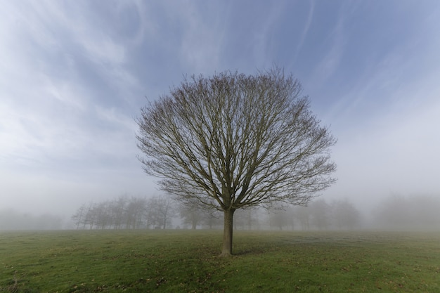 Close shot of a tree with no leaves on a grassy field in a fog
