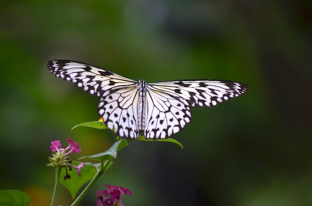 Close shot of a white butterfly sitting on a plant with a blurred