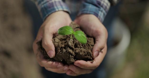 Закройте руки фермера, держащего саженец семенного растения, органическую ферму, экологическое сельское хозяйство, урожай, начало сезона посадки