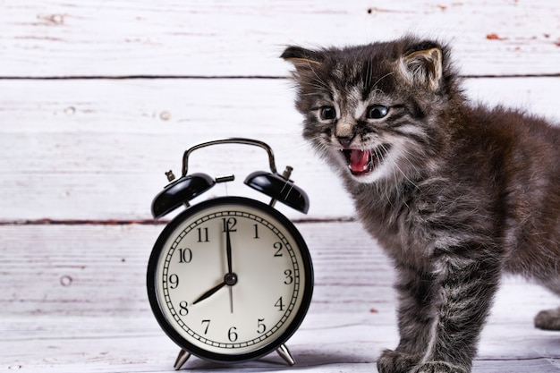 Close up of an adorable kitten and a clock