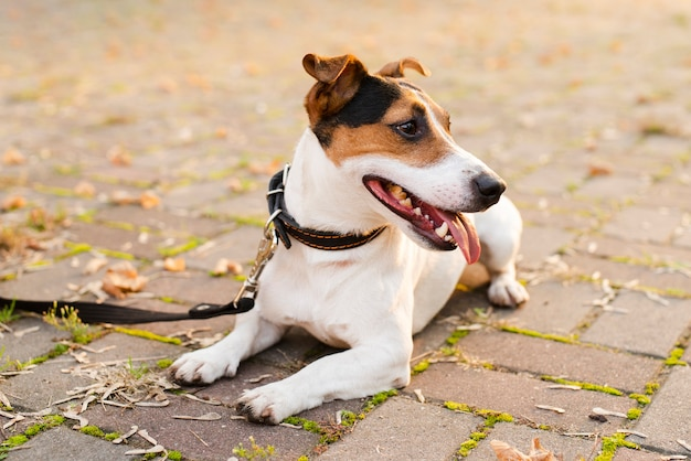 Крупным планом очаровательны маленькая собака на открытом воздухе