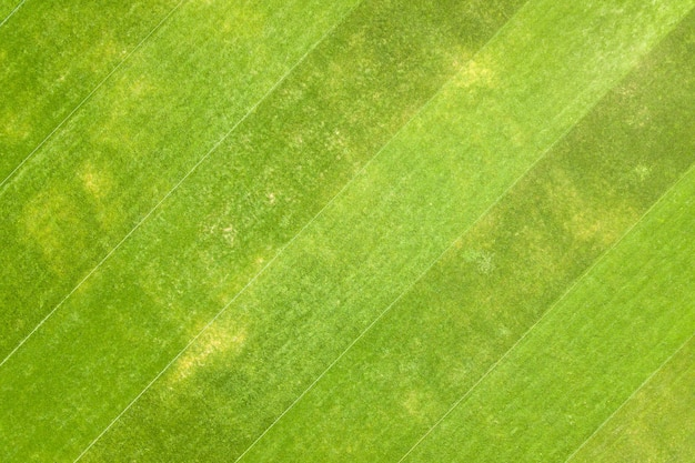 Close up aerial view of surface of green freshly cut grass on football stadium in summer.