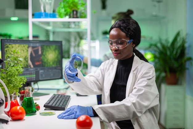 Close up of african scientist looking at petri dish with green leaf examining plant expertise. in background her collegue analyzing dna sample working in biochemistry laboratory.