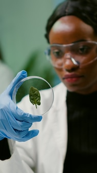 Close up of african scientist looking at petri dish with green leaf