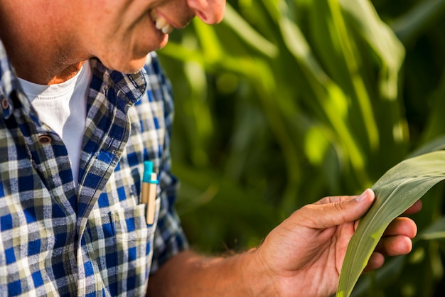 Close up agronomist holding a leaf