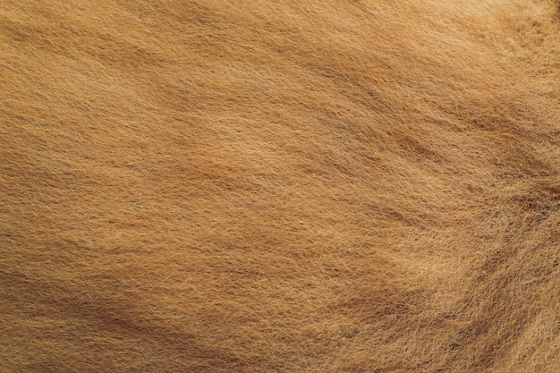 Close up of an animal colored fur texture.