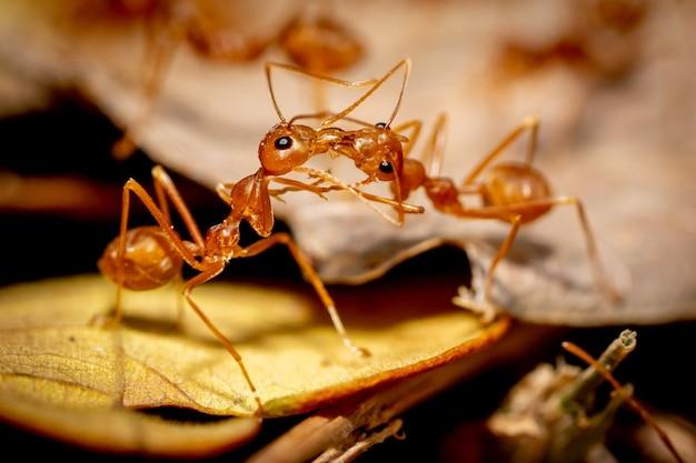 Заделывают насекомых муравьев на земле
