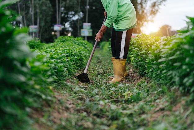 분야에서 아시아 농부가 잔디를 닫습니다