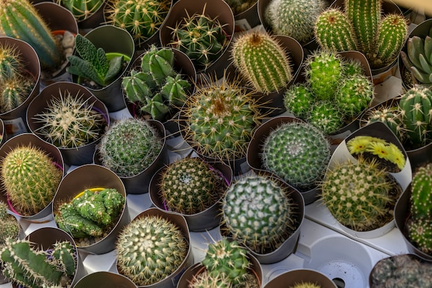 Close-up assortment of cactuses plants