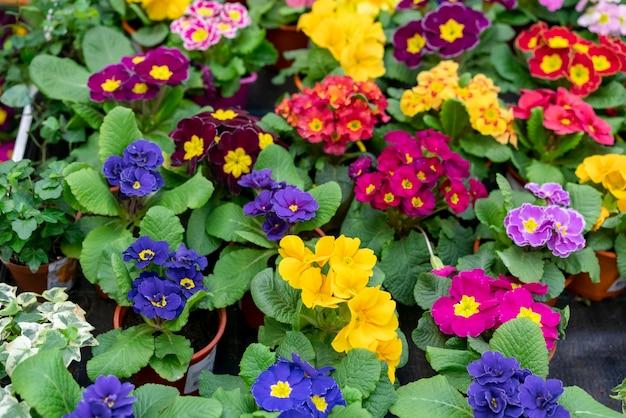 Assortimento di close-up di fiori colorati