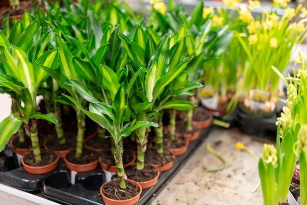Assortimento di close-up di eleganti piante da appartamento