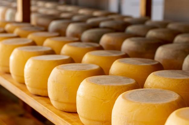 Ассортимент вкусных сыров крупным планом